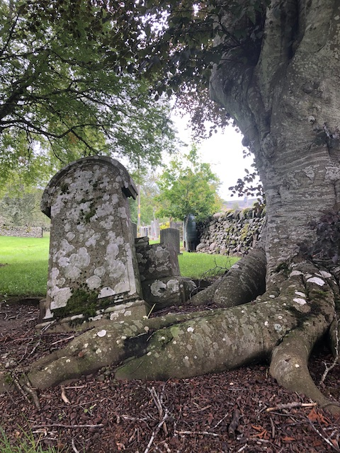 Tree roots pushing a gravestone up and out