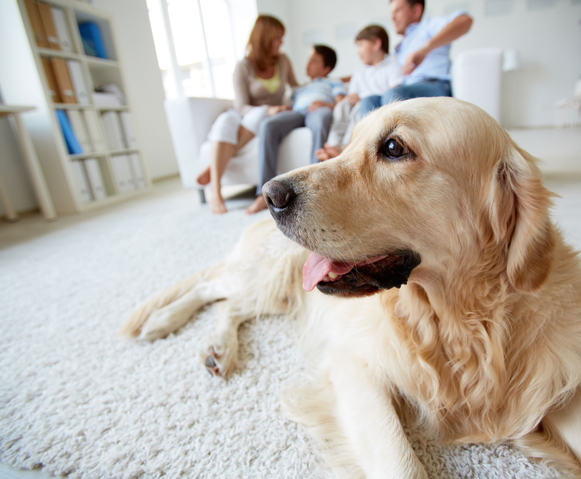 Moving Home with Pets – Our Top Tips