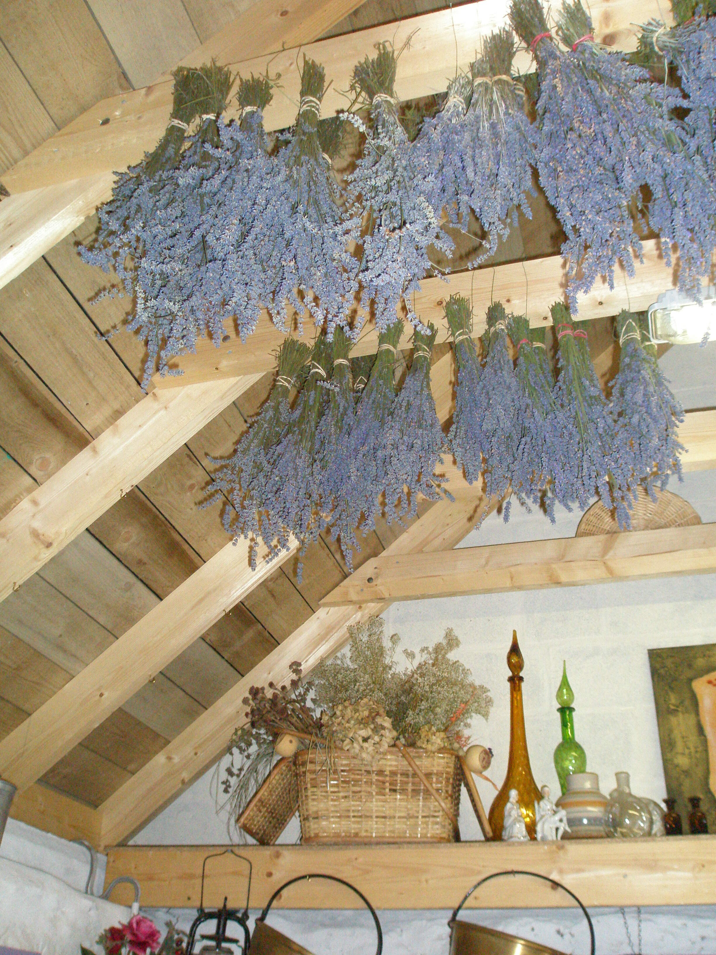 Drying room at Lavender Farm, Scotland 2006