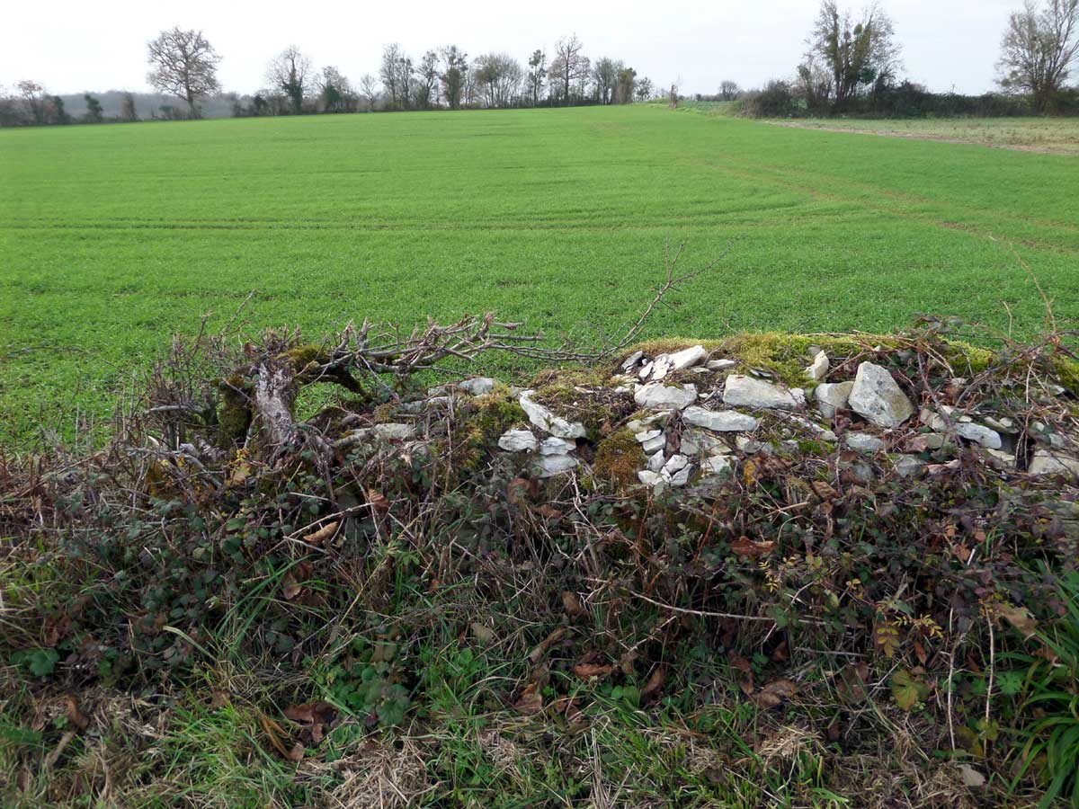 Hedgerow and stone wall France