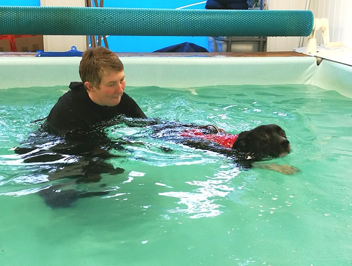 arthritis relief for dogs the Solway Canine Hydrotherapy Centre Dumfries