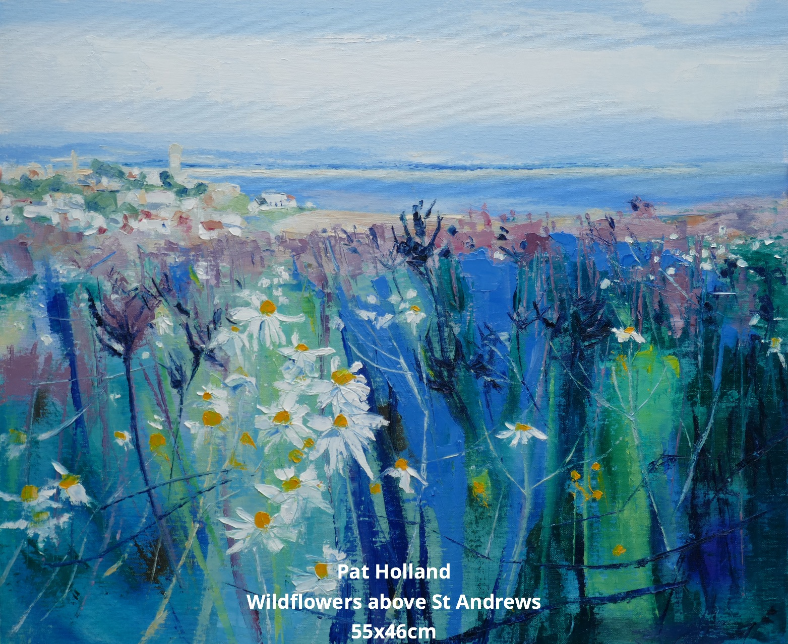 Wildflowers above St Andrews