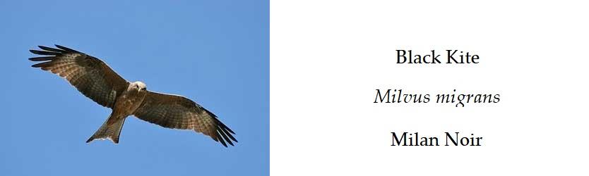 Birds In France