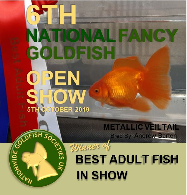 6th National Fancy Goldfish Show October 2019