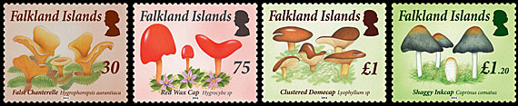 Falkland Islands Fungijpg