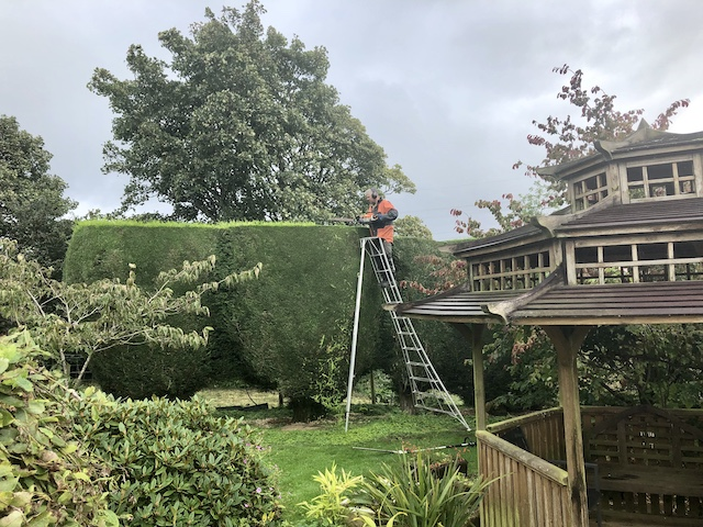 Hedge trimming at height