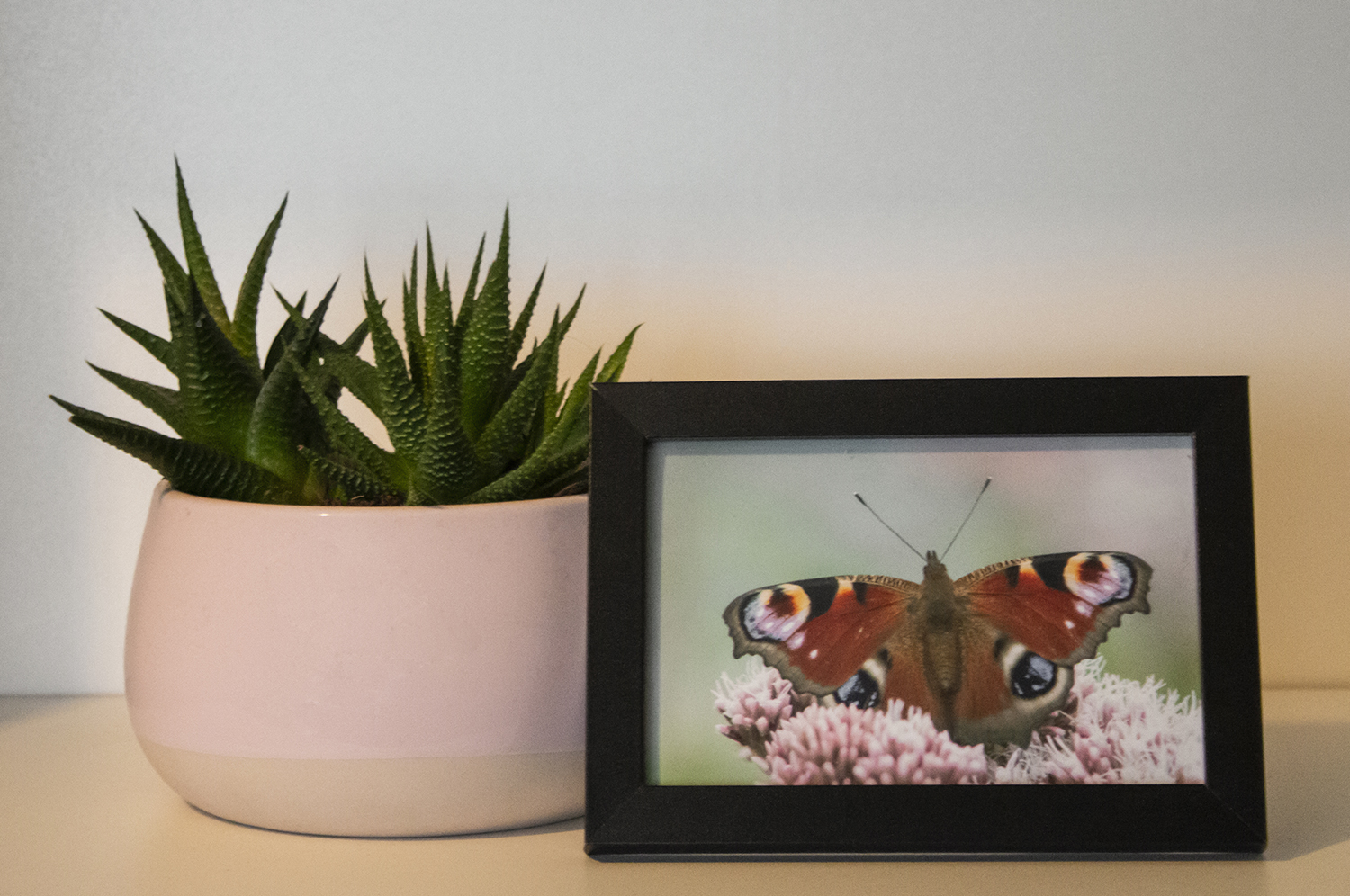 Small peacock butterfly framed photo