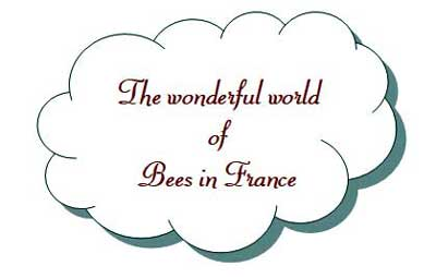 All about bees in France