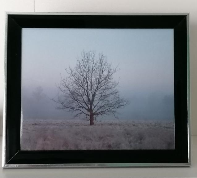 Tree on a foggy morning