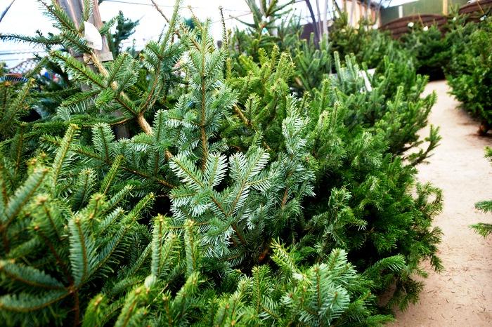 Trees2JPG