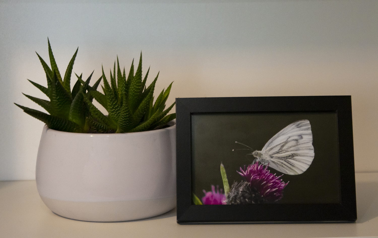 Small butterfly framed photo
