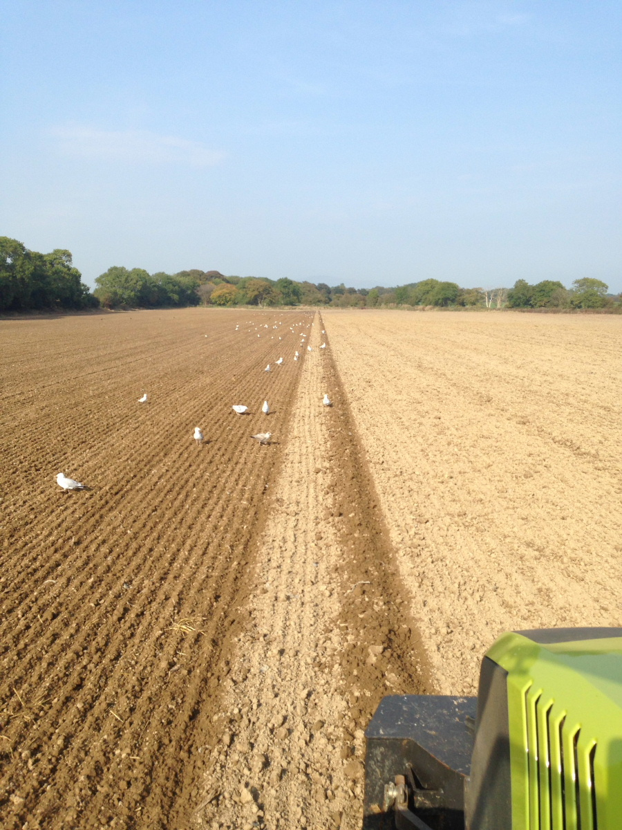 Tillage and plough based seeding by RG Contracting in Dumfries and Galloway and South Ayrshire