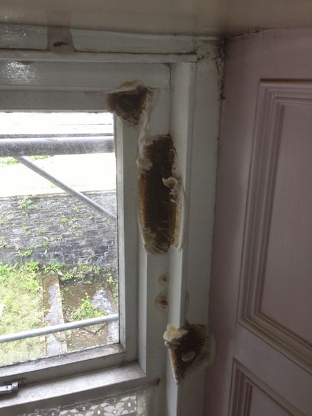 Dry rot treatments by Ryedale Remedials Ltd of Dumfries