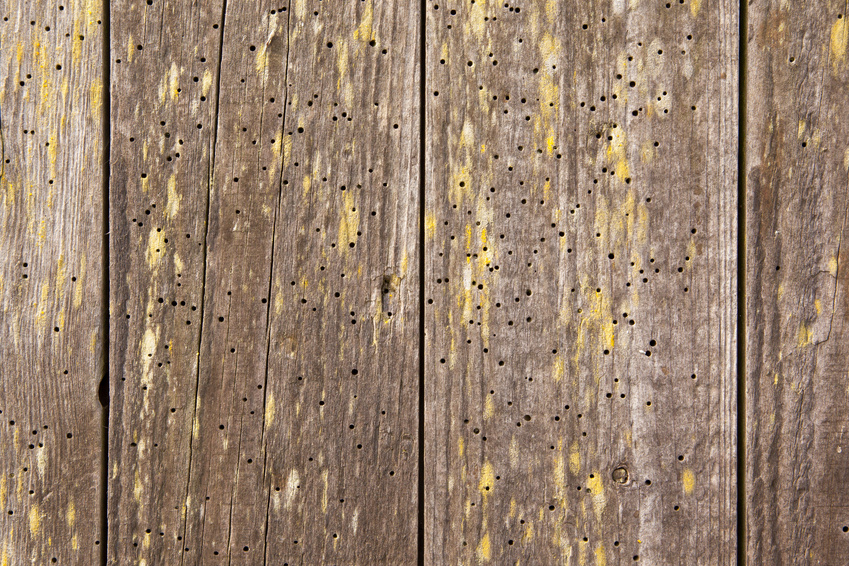 Woodworm treatments by Ryedale Remedials Ltd of Dumfries