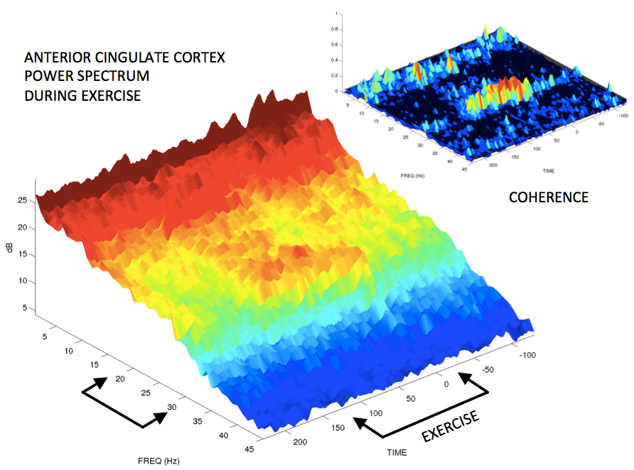 Anterior Cingulate Cortex Power spectrum During Exercise.