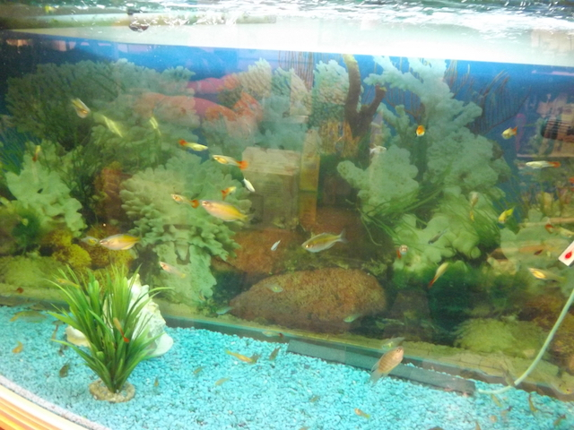 Aquarium containing small fish