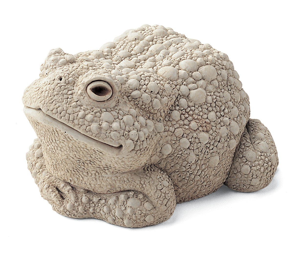 Crouched warty toad