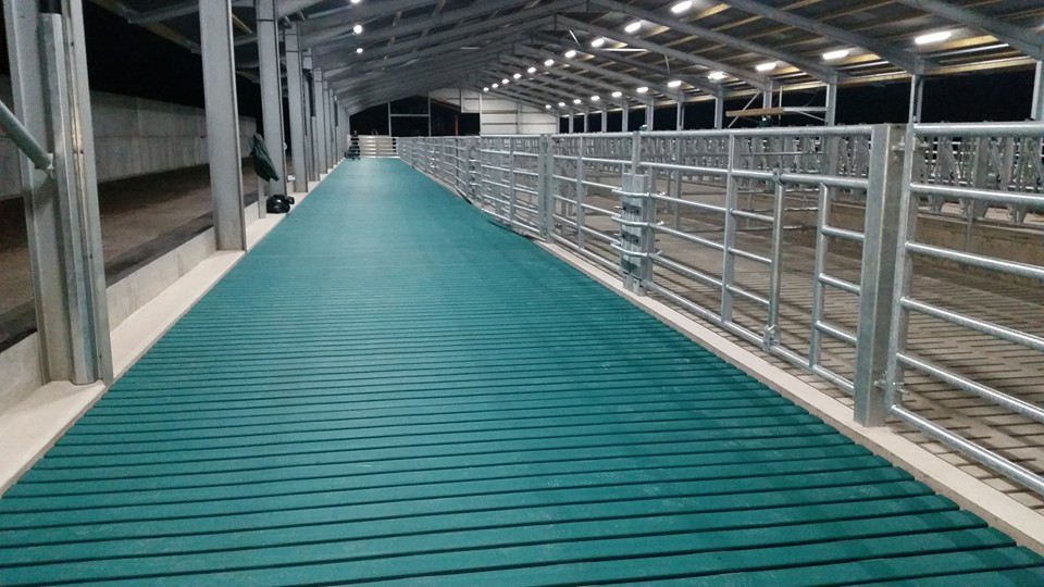 Wide expanse of Comfort Slat Mats leading to cow pens