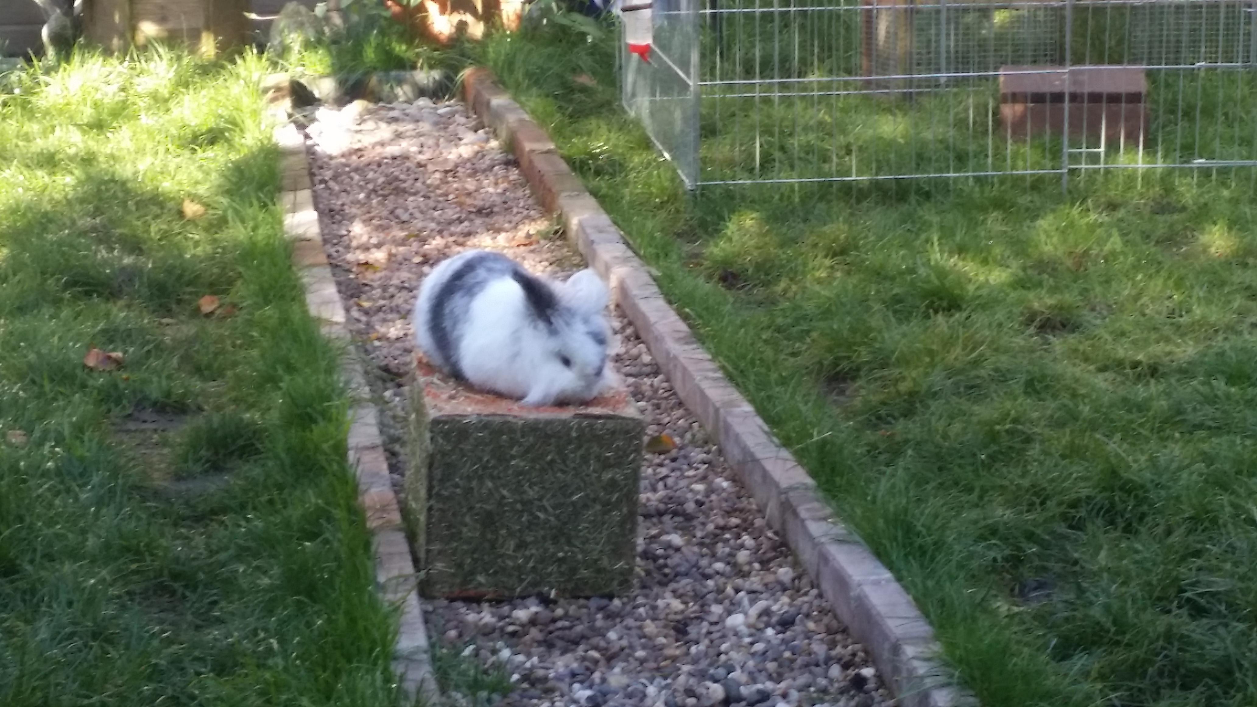 Garden Centre: Pet And Garden Centre Haywards Heath