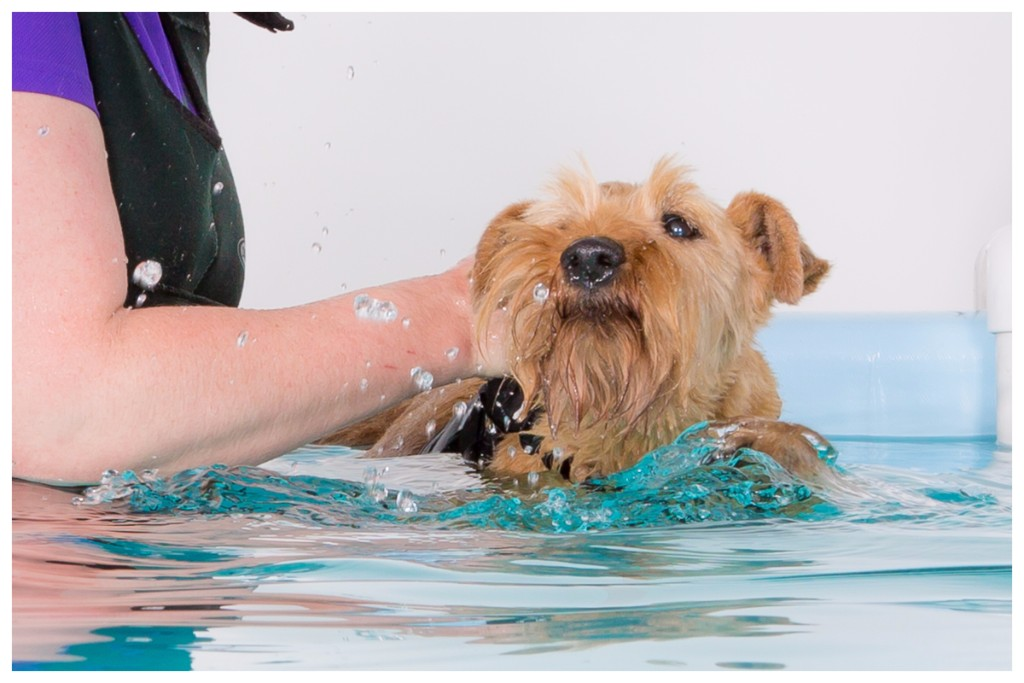 canine hydrotherapy, dog hydrotherapy, physiotherapy, hartpury, gloucester