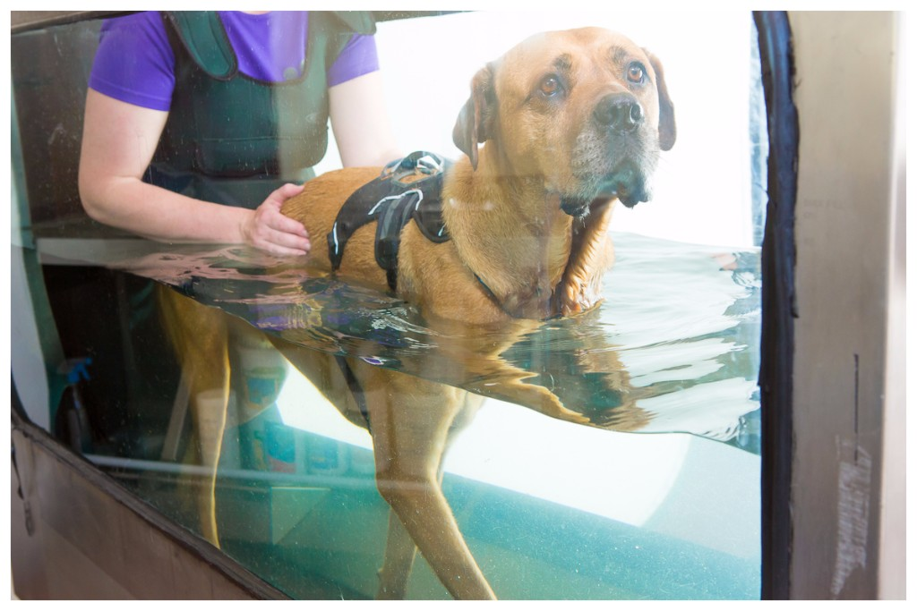 hydrotherapy underwater treadmill, physiotherapy, gloucester, gloucestershire, hartpury