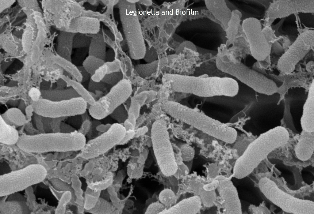 Legionella ... Reputation Risk