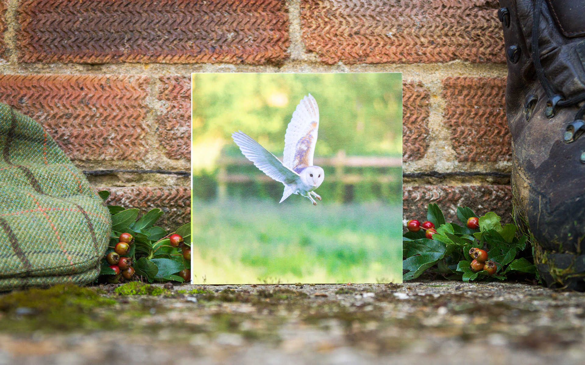 British Birds - Greeting Card Trio