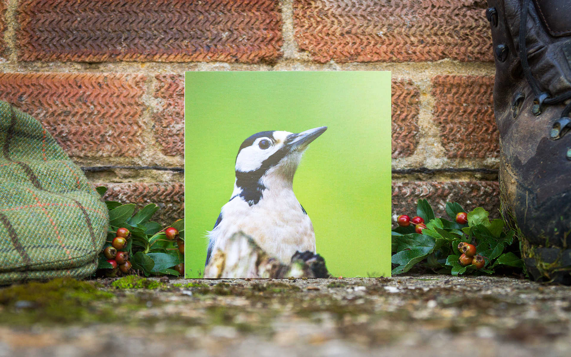 Great Spotted Woodpecker - Individual Greeting Card