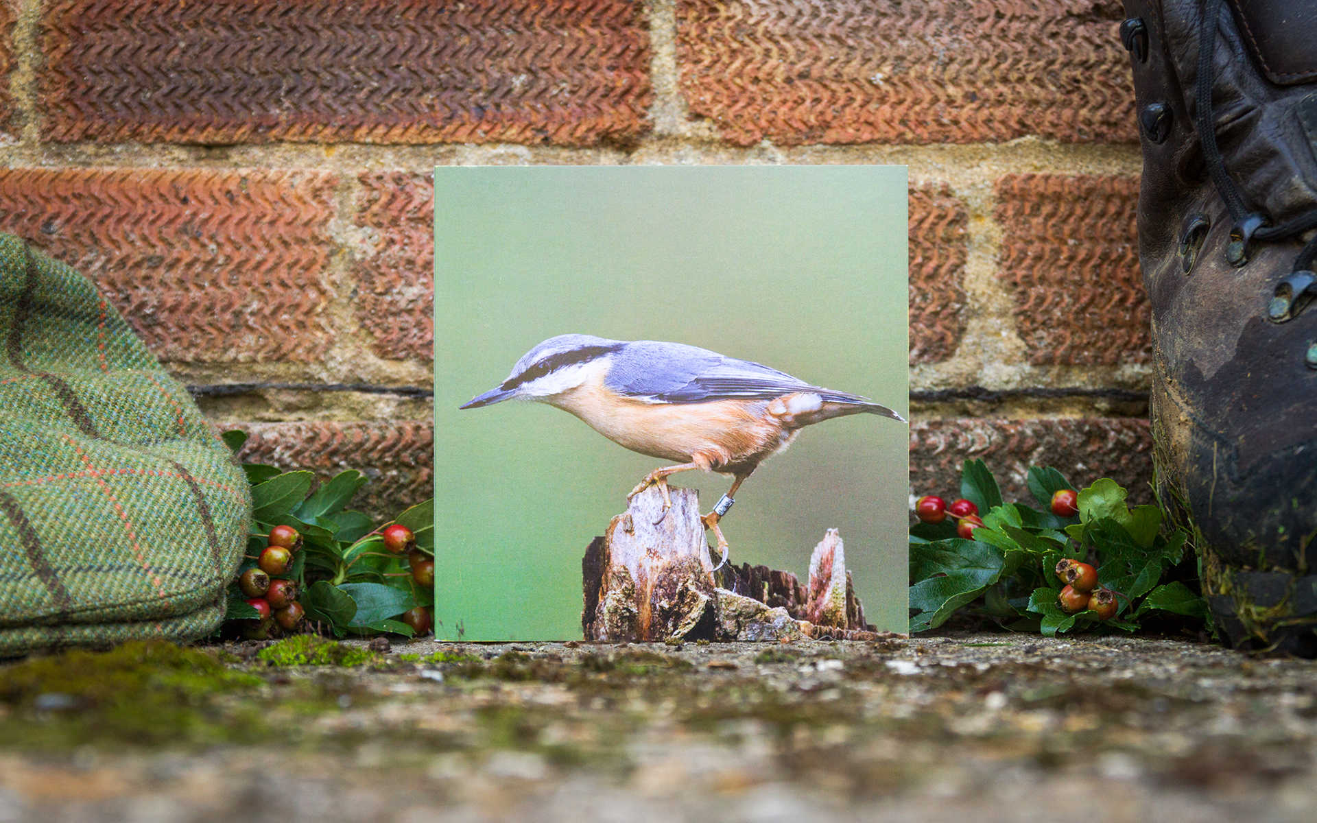 Nuthatch - Individual Greeting Card