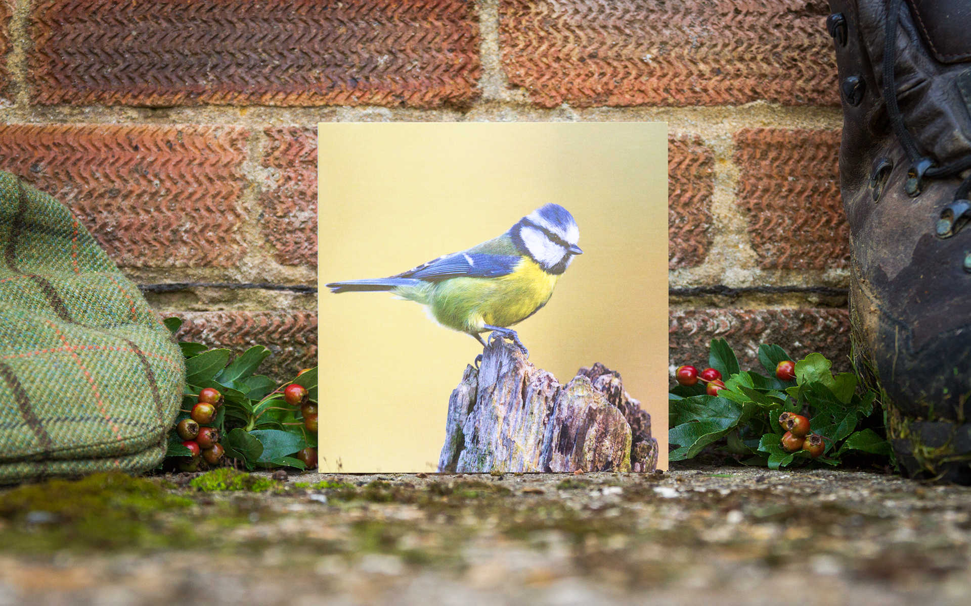 Blue Tit - Individual Greeting Card