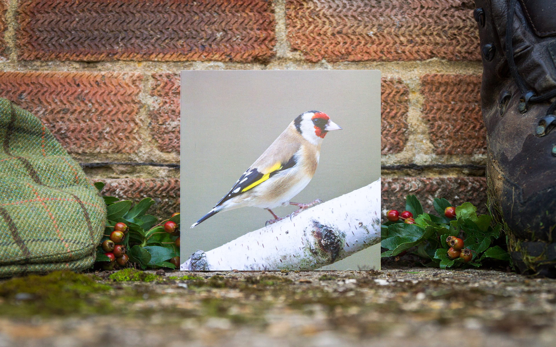Goldfinch - Individual Greeting Card
