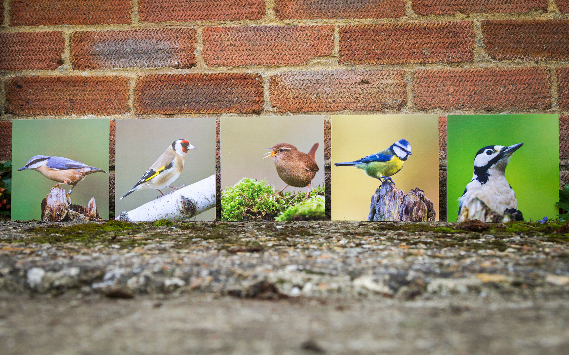 Garden Birds - Mixed Greeting Cards