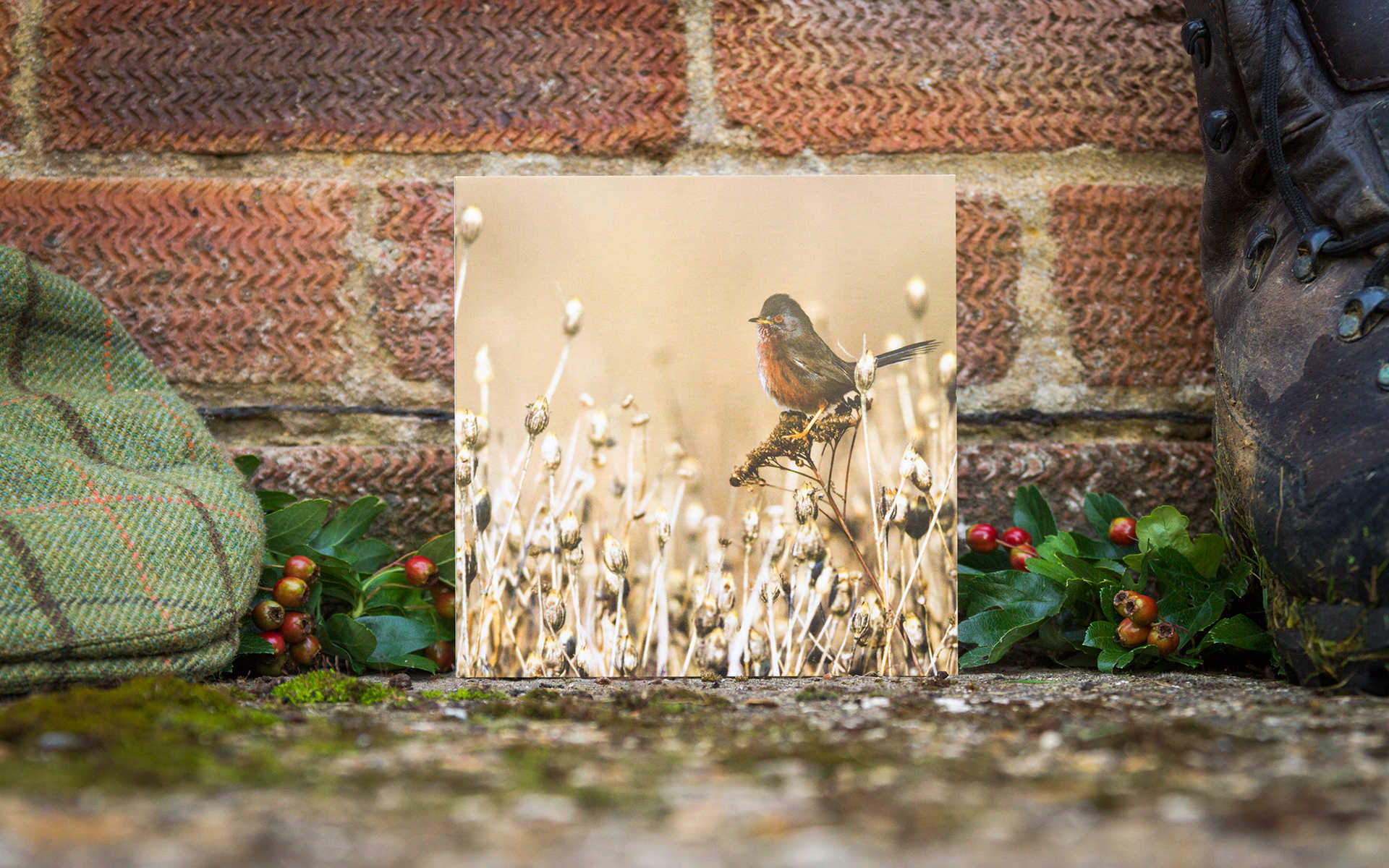 Dartford Warbler - Individual Greeting Card