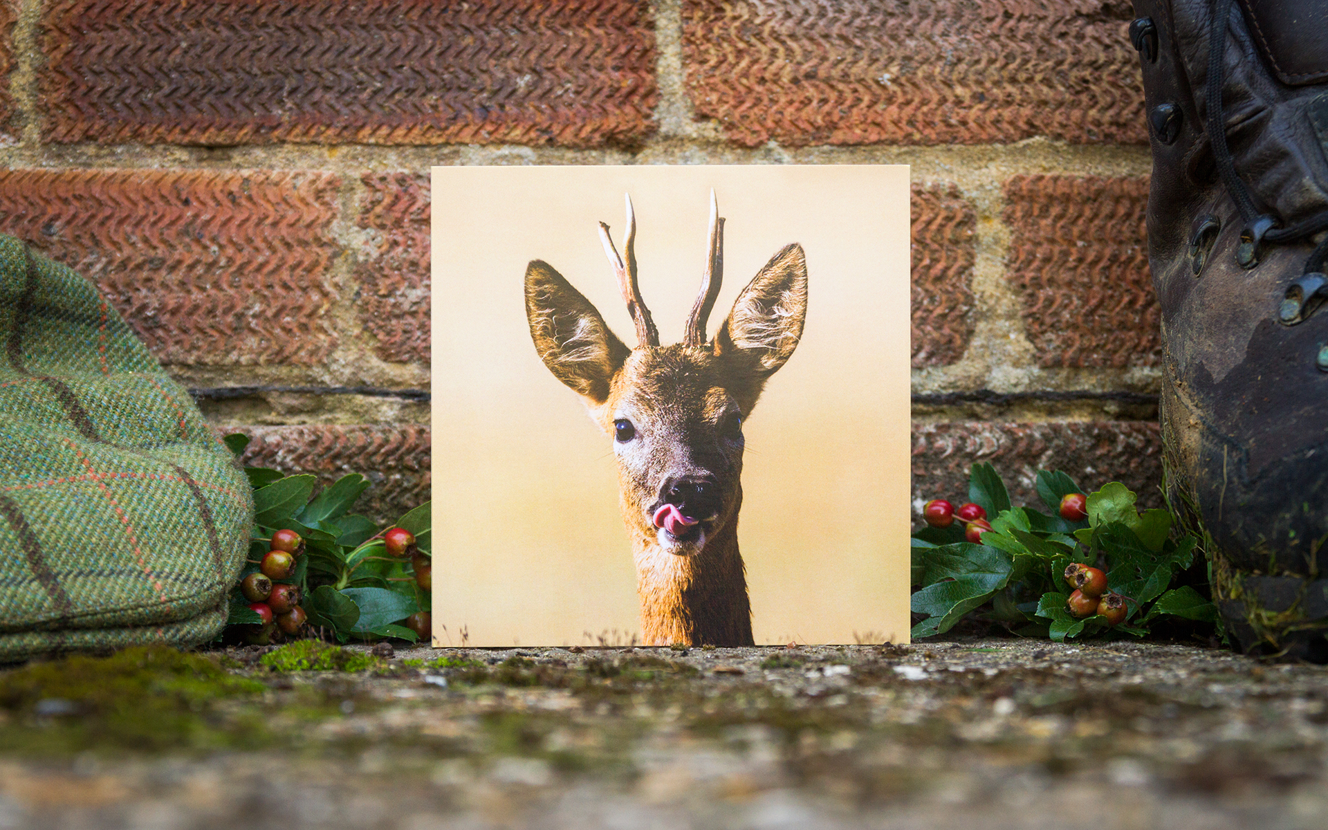 Roe Buck - Individual Greeting Card