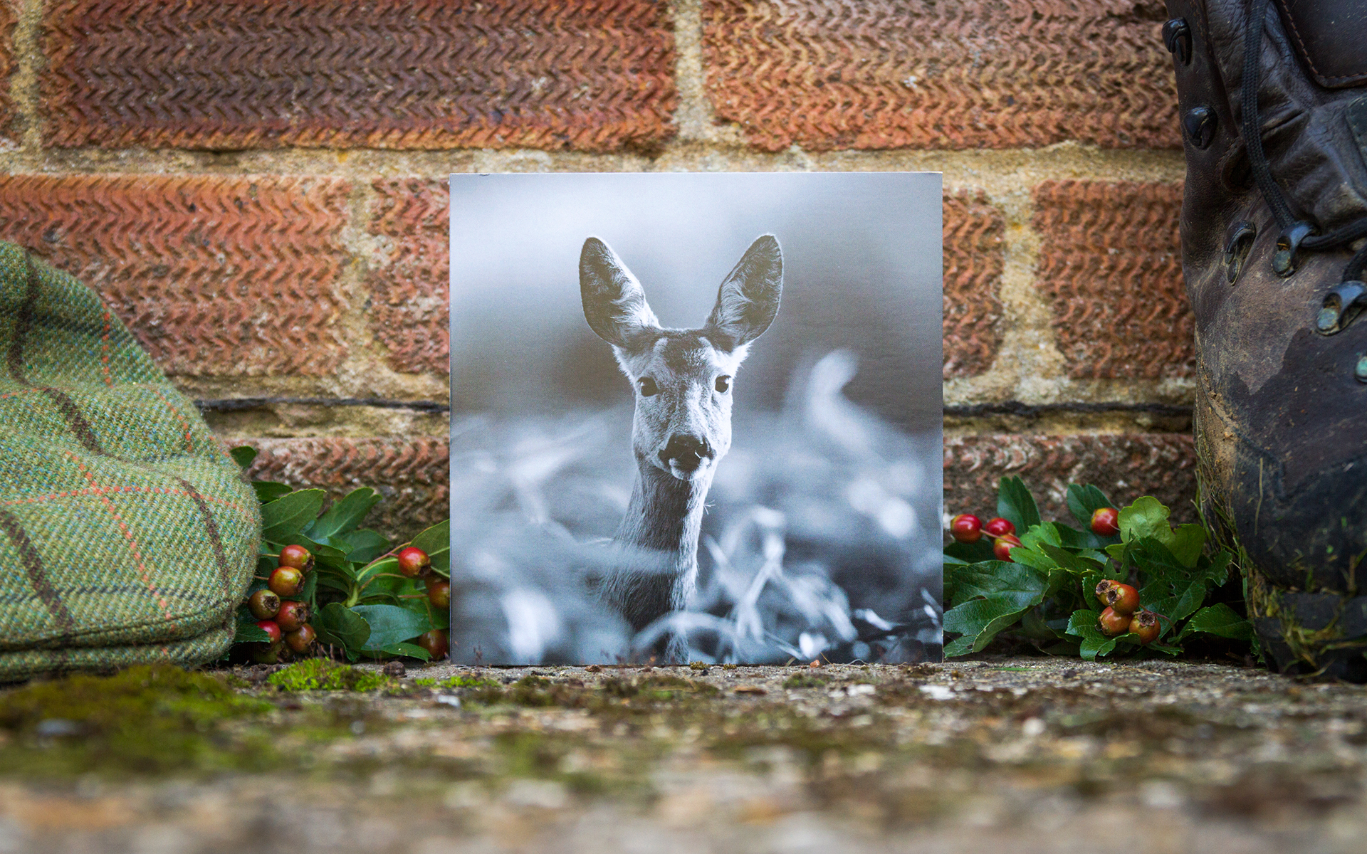 Roe Doe - Individual Greeting Card