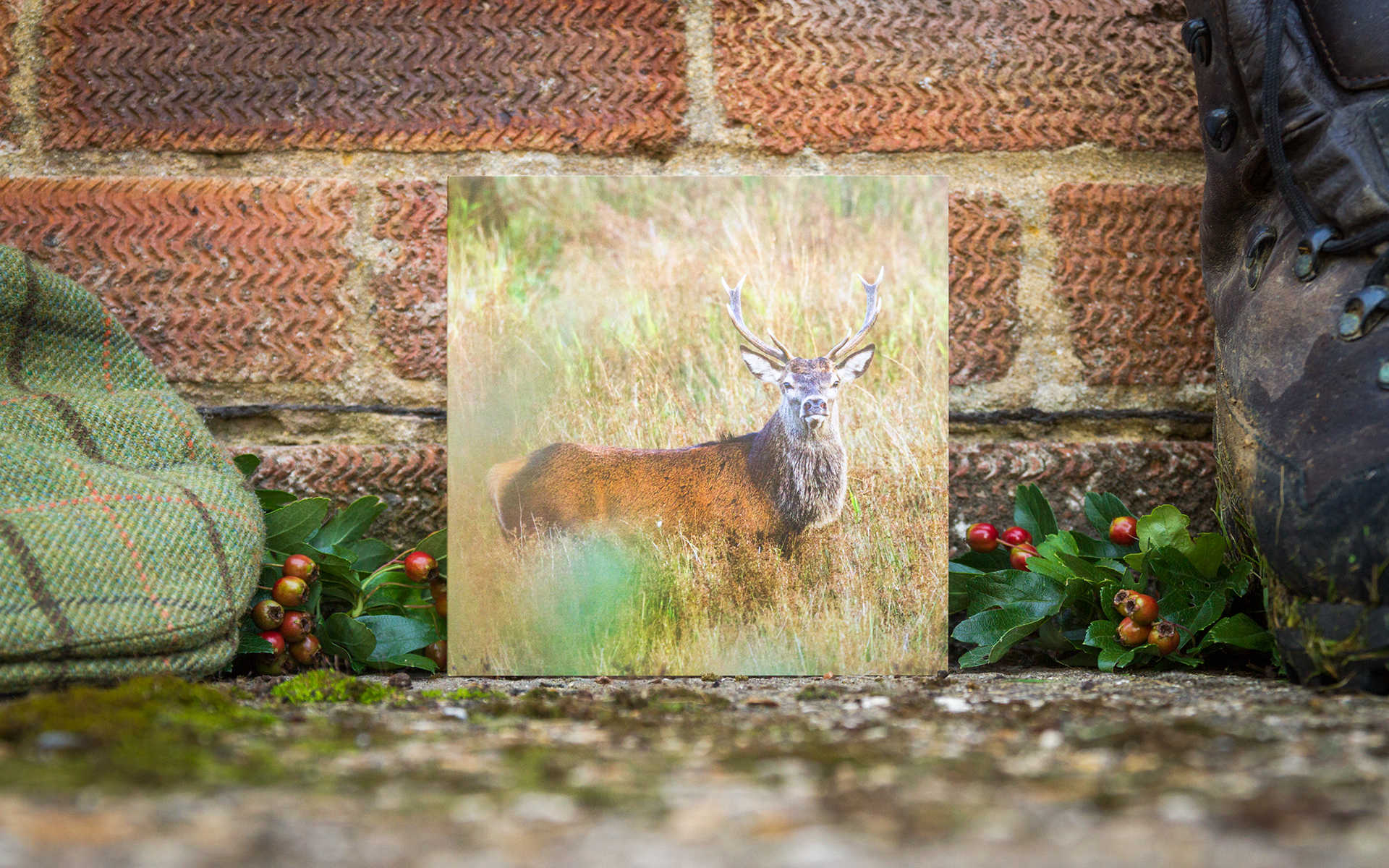 Red Stag - Individual Greeting Card