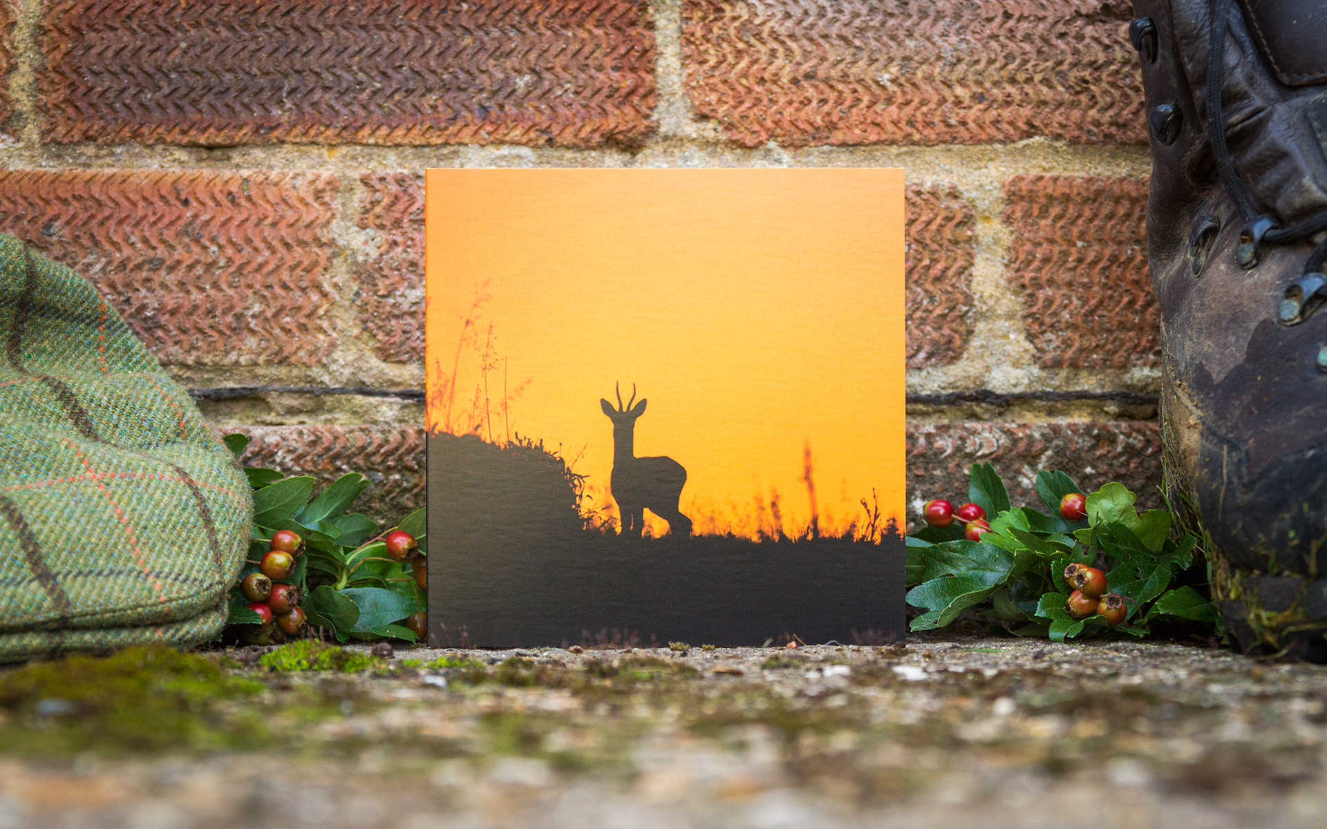 Sunset Buck - Individual Greeting Card