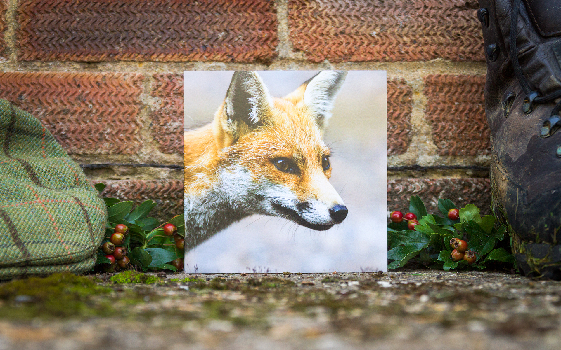 Red Fox - Individual Greeting Card