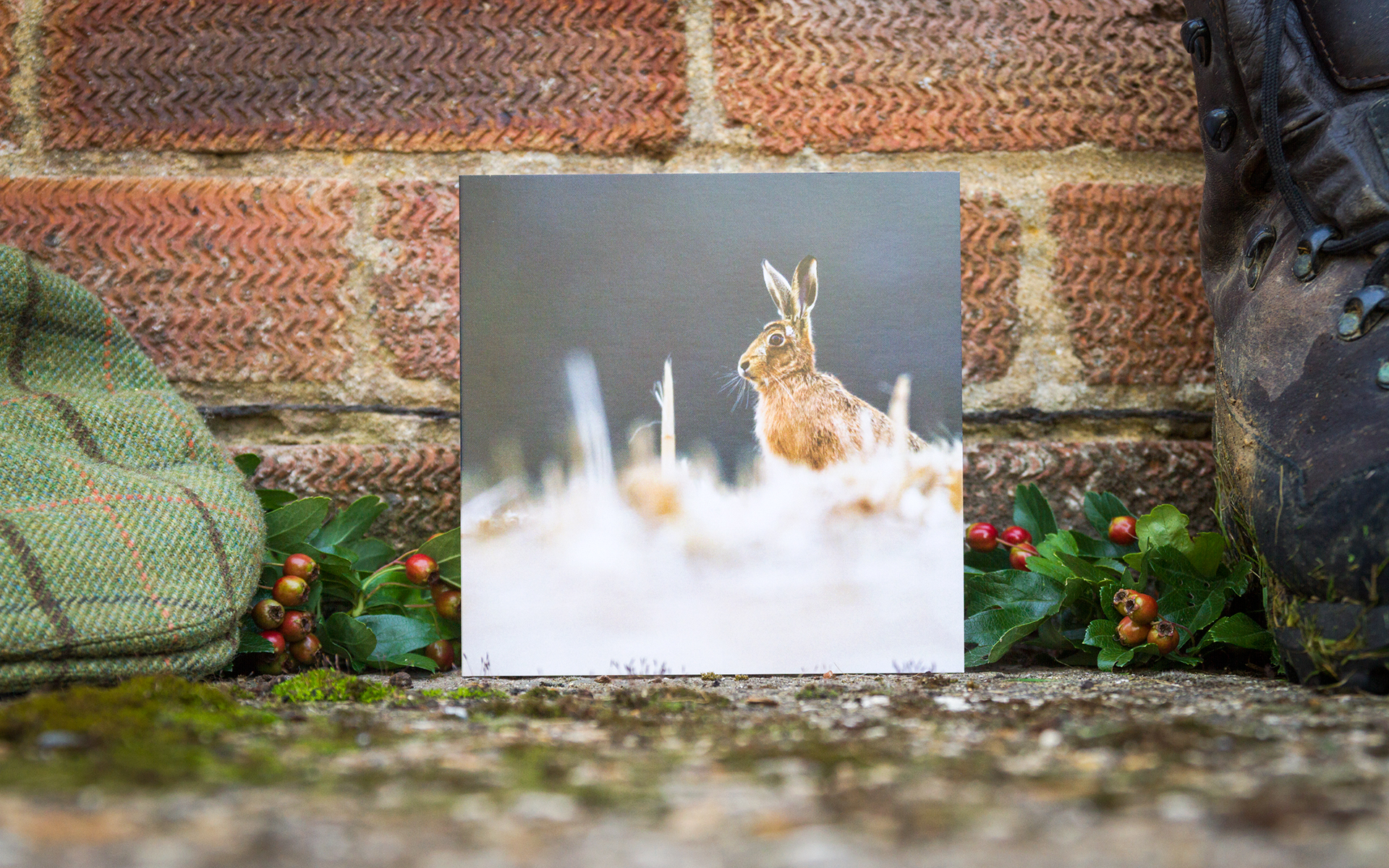 Brown Hare - Individual Greeting Card