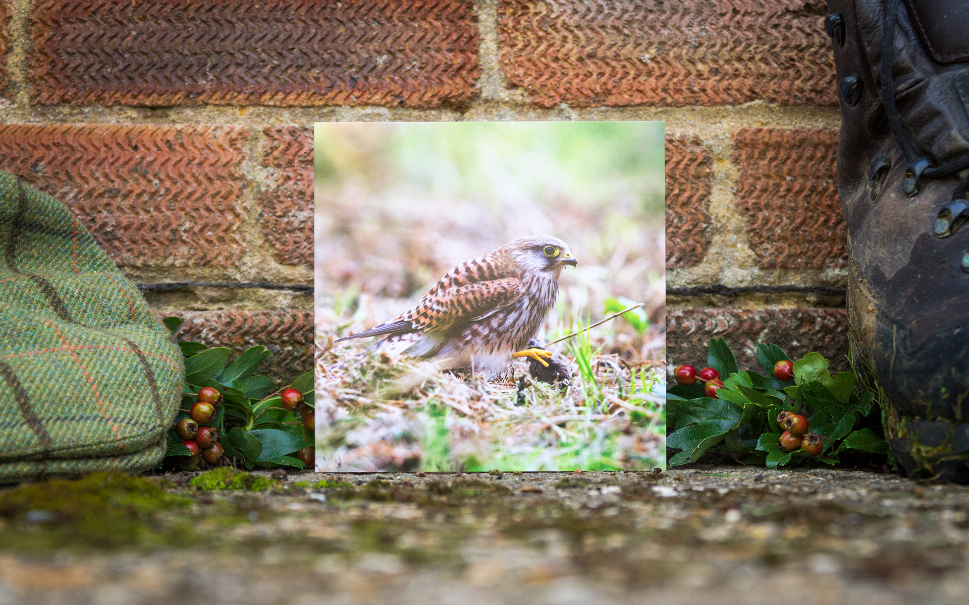 Kestrel - Individual Greeting Card