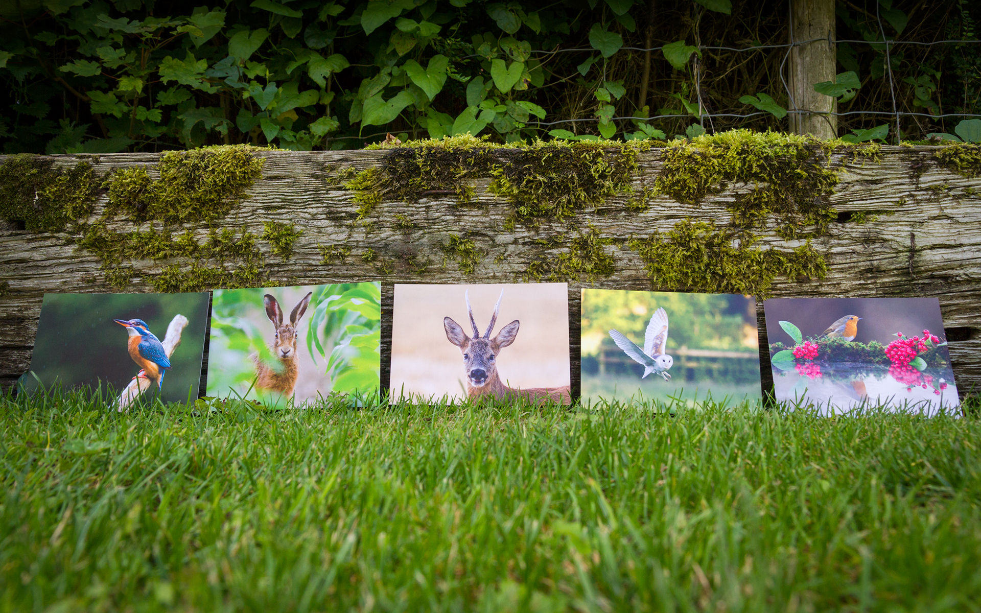 British Wildlife - Mixed A6 Postcards