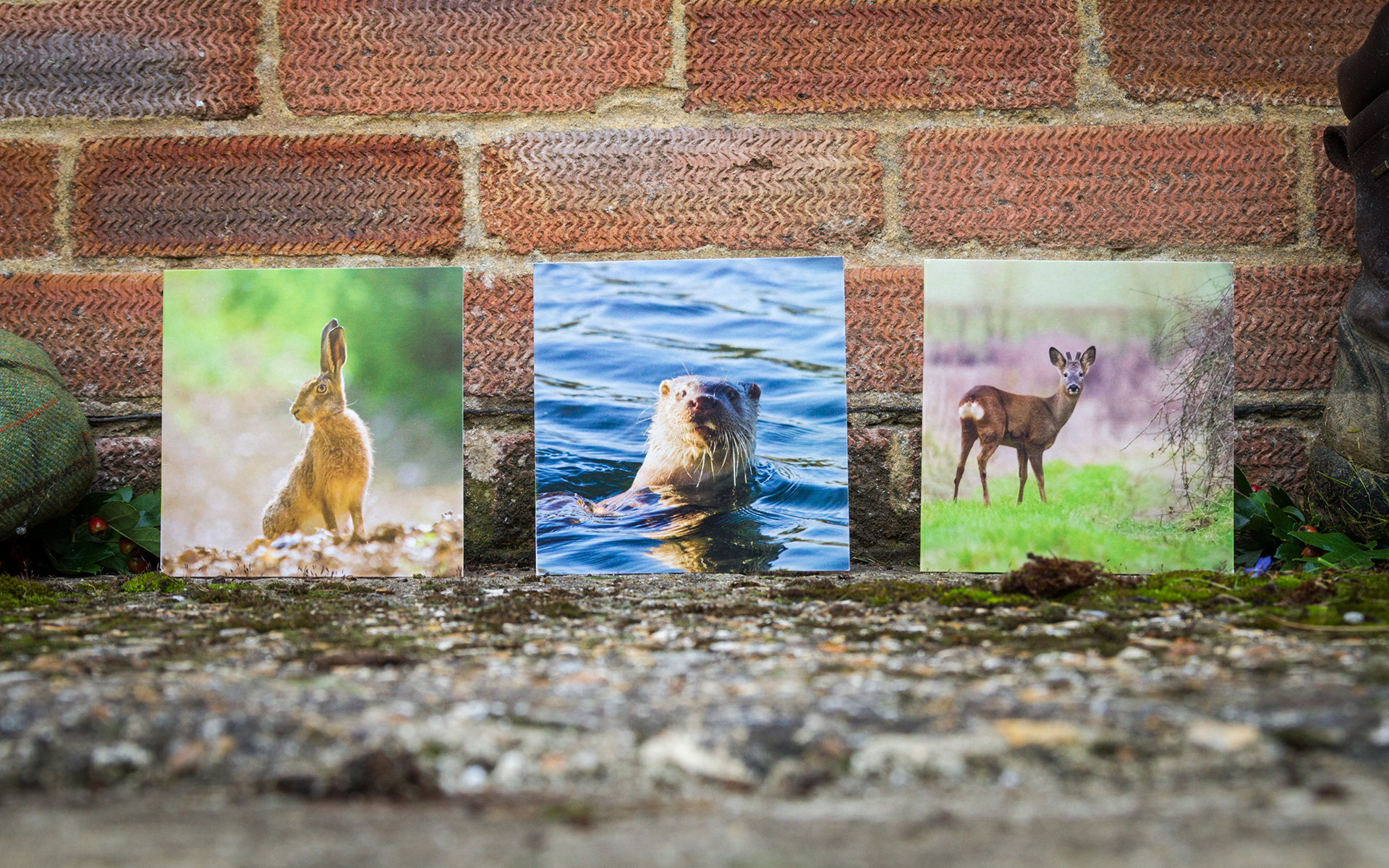 British Mammals - Greeting Card Trio